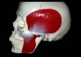 Disordini cranio mandibolari teorico